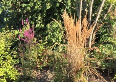 Bepflanzung Maibach Gartenbau GmbH Safnern Orpund Biel Seeland 7