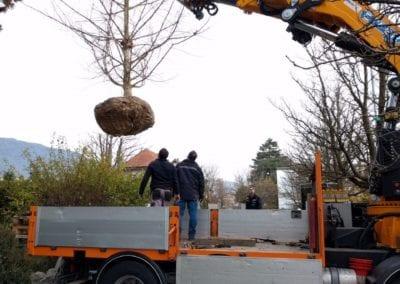 Grossbaumverpflanzung Maibach Gartenbau GmbH Safnern Lengnau Seeland 8