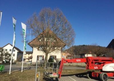 Bäume schneiden Hebebühne Maibach Gartenbau GmbH Safnern Dotzigen