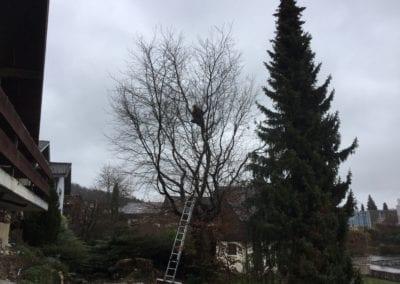 Bäume schneiden Selbstsicherung Maibach Gartenbau GmbH Safnern Orpund