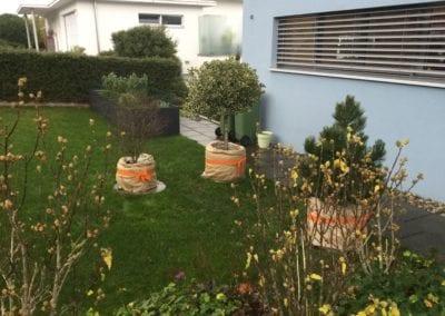 Pflanzen einpacken Maibach Gartenbau GmbH Safnern Bettlach Seeland 1