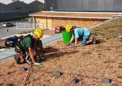 Dachbegrünung pflegen Maibach Gartenbau GmbH Safner Biel Seeland